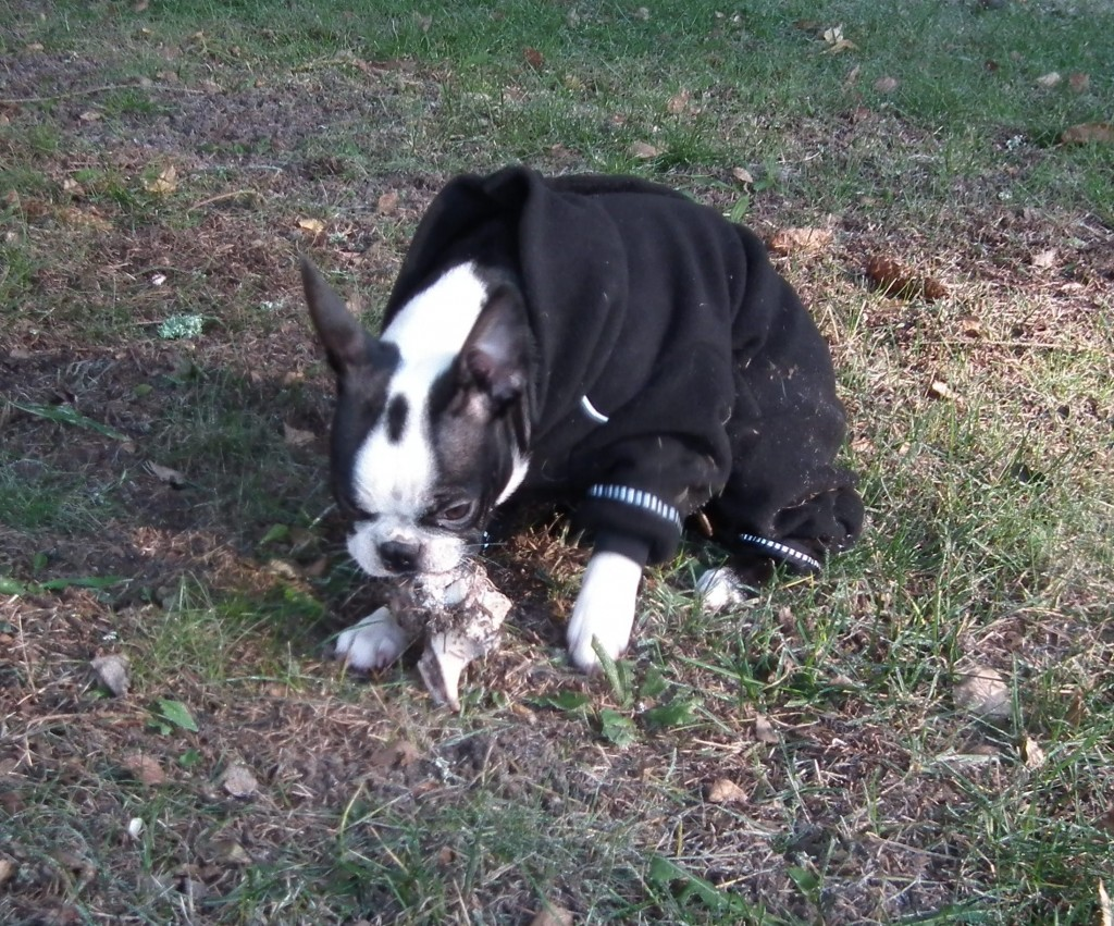 blogg;bostonterrier;hurtta;fleeceoverall