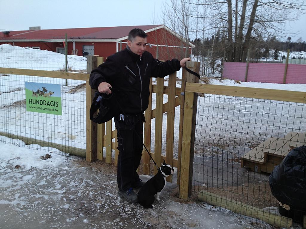 blogg;bostonterrier;Polarskäggets Charmiga Catla;jordnära hund;hunddagis