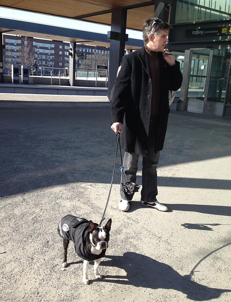 blogg;bostonterrier