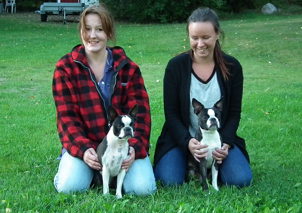 blogg;bostonterrier;polarskäggets charmiga catla;top boston's just a kiss